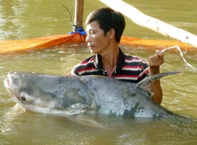Săn cá khủng giá hàng chục triệu đồng ở miền Tây ảnh 6