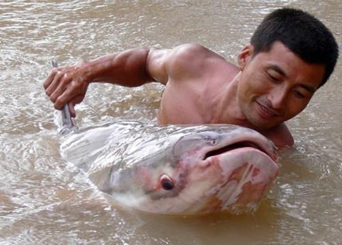 Săn cá khủng giá hàng chục triệu đồng ở miền Tây ảnh 7