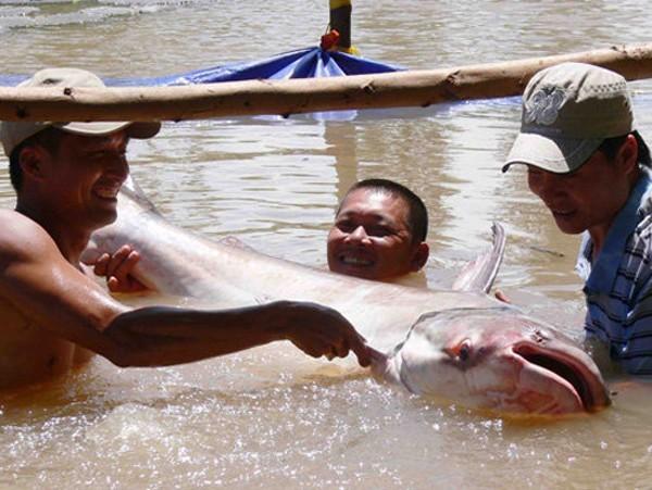 Săn cá khủng giá hàng chục triệu đồng ở miền Tây ảnh 8