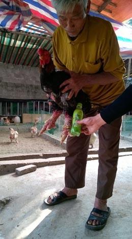 Loạn thị trường gà Đông Tảo dịp Tết ảnh 1