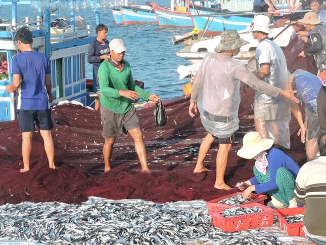 Ngư dân Lý Sơn trúng 'lộc biển' đầu năm ảnh 1