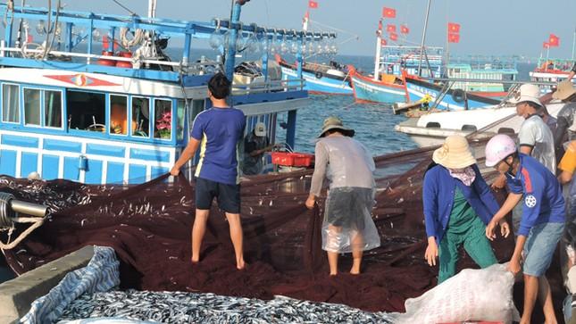 Ngư dân Lý Sơn trúng 'lộc biển' đầu năm ảnh 2