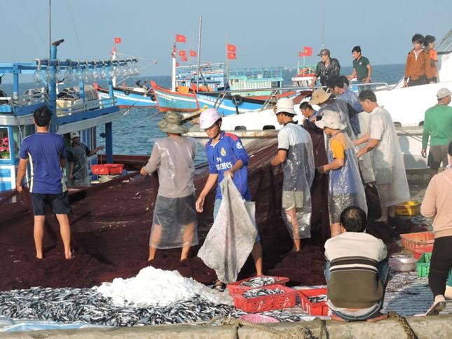 Ngư dân Lý Sơn trúng 'lộc biển' đầu năm ảnh 3