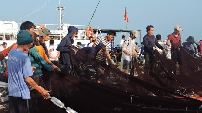 Ngư dân Lý Sơn trúng 'lộc biển' đầu năm ảnh 4