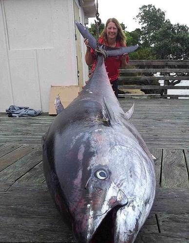 """Câu được thủy quái """"khủng"""" nặng 411,6kg, dài 3m ảnh 1"""
