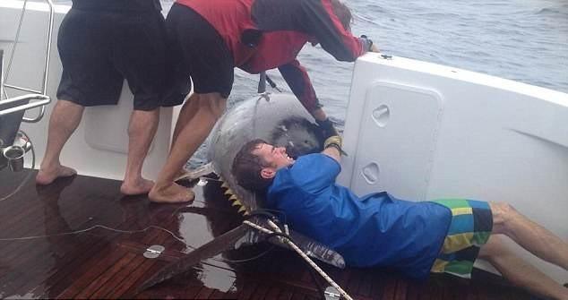 """Câu được thủy quái """"khủng"""" nặng 411,6kg, dài 3m ảnh 2"""
