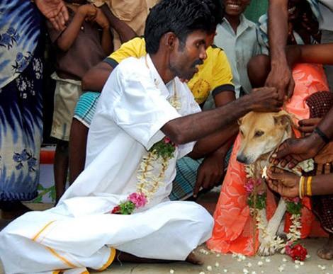 Lạ kỳ những người nhất quyết kết hôn với... động vật ảnh 4