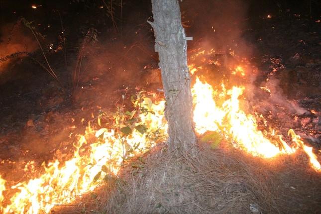 Rừng thông cháy rừng rực trong đêm ở Nghệ An ảnh 6