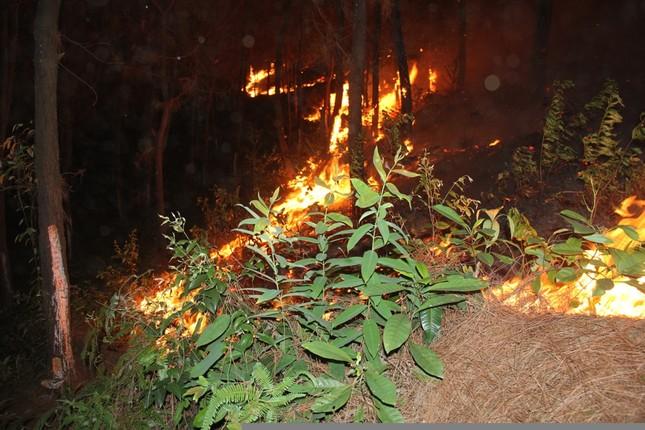 Rừng thông cháy rừng rực trong đêm ở Nghệ An ảnh 7