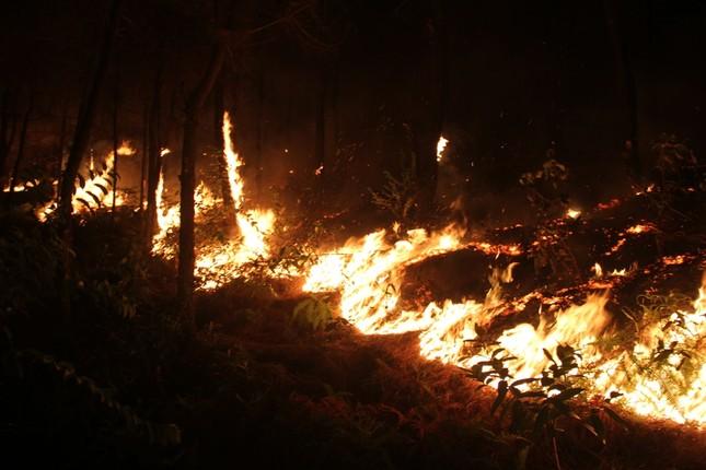 Rừng thông cháy rừng rực trong đêm ở Nghệ An ảnh 8