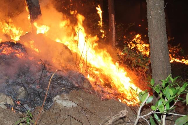 Rừng thông cháy rừng rực trong đêm ở Nghệ An ảnh 10