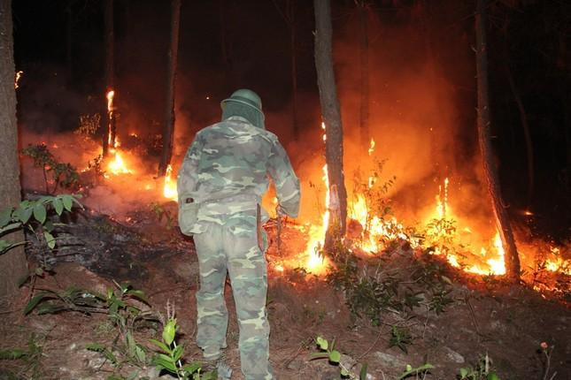 Rừng thông cháy rừng rực trong đêm ở Nghệ An ảnh 3