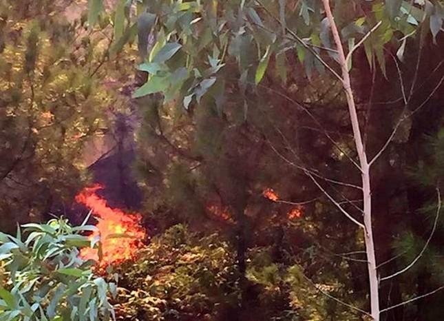 Rừng thông bốc cháy dữ dội trong nắng nóng ảnh 1