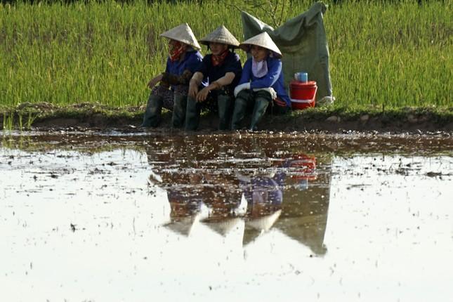 Xót xa cảnh người nông dân mưu sinh dưới nắng nóng đỉnh điểm ảnh 7