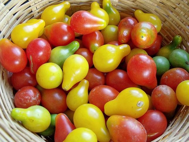 Cà chua bi hình trái lê hớp hồn bà nội trợ ảnh 1