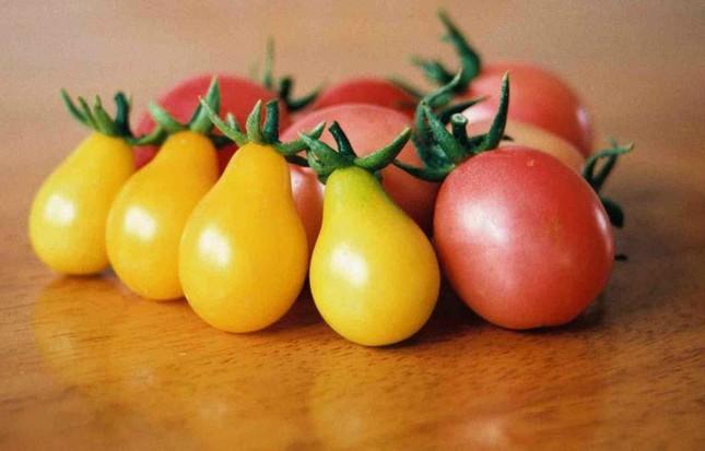 Cà chua bi hình trái lê hớp hồn bà nội trợ ảnh 5
