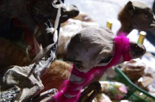 Chợ phù thủy bán bùa yêu ở Bolivia ảnh 1