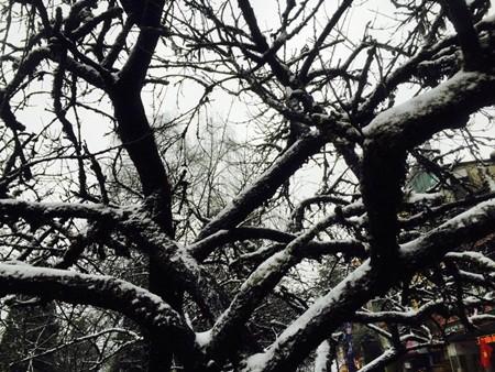 Đào tết Sa Pa tàn lụi vì băng tuyết ảnh 3