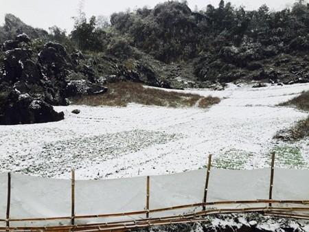 Đào tết Sa Pa tàn lụi vì băng tuyết ảnh 7