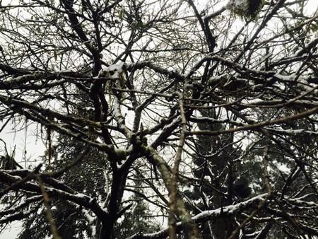 Đào tết Sa Pa tàn lụi vì băng tuyết ảnh 10