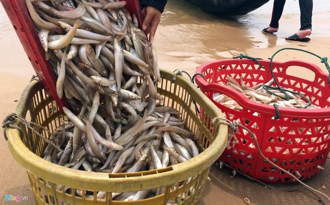 Ngư dân Hà Tĩnh ra khơi đánh cá ảnh 2