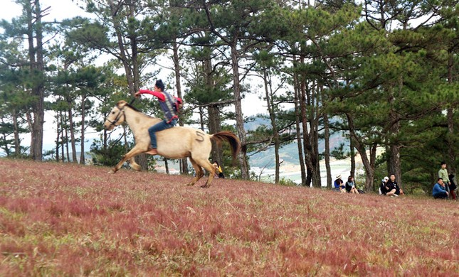 Đua ngựa không yên trên đồi cỏ hồng ảnh 1