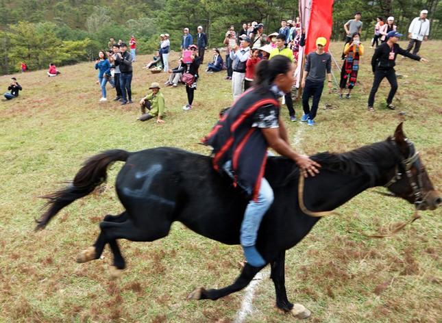 Đua ngựa không yên trên đồi cỏ hồng ảnh 2