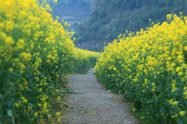 Những địa điểm chụp hoa cải đẹp tại Hà Nội giới trẻ phải biết ảnh 1
