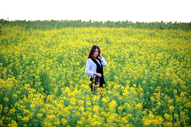 Những địa điểm chụp hoa cải đẹp tại Hà Nội giới trẻ phải biết ảnh 3