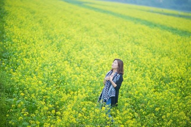 Những địa điểm chụp hoa cải đẹp tại Hà Nội giới trẻ phải biết ảnh 5