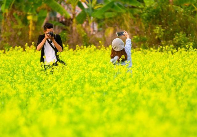 Những địa điểm chụp hoa cải đẹp tại Hà Nội giới trẻ phải biết ảnh 6