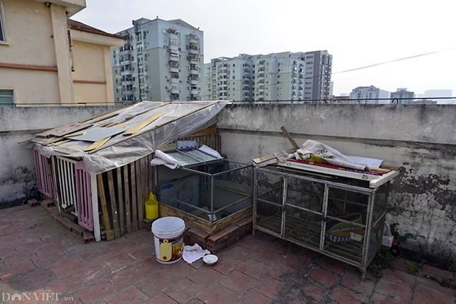 Nhếch nhác khu tái định cư ở Hà Nội: Chuồng gà, 'chuồng cọp' đua mọc ảnh 3