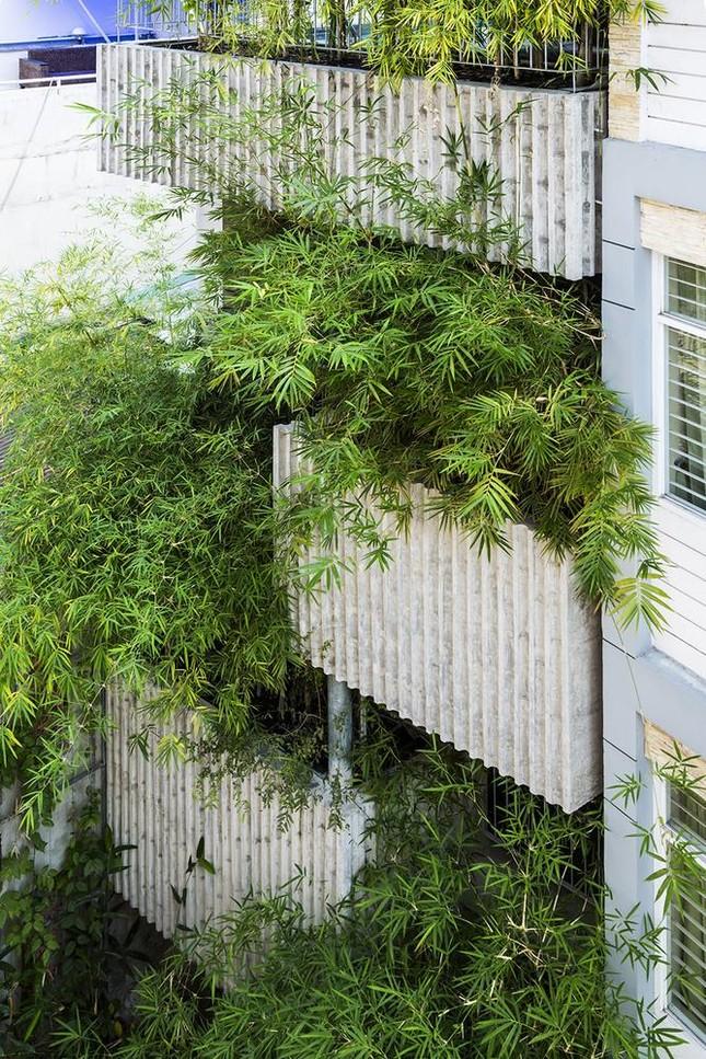 'Nhà tre' như rừng cây trong hẻm Sài Gòn, vừa tắm vừa nghe chim hót ảnh 2