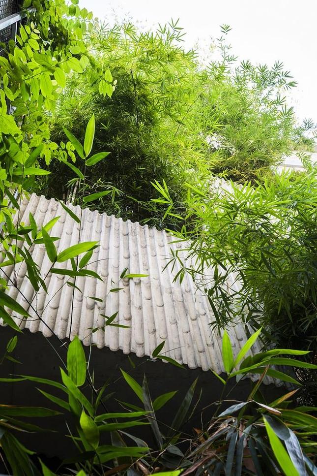 'Nhà tre' như rừng cây trong hẻm Sài Gòn, vừa tắm vừa nghe chim hót ảnh 3