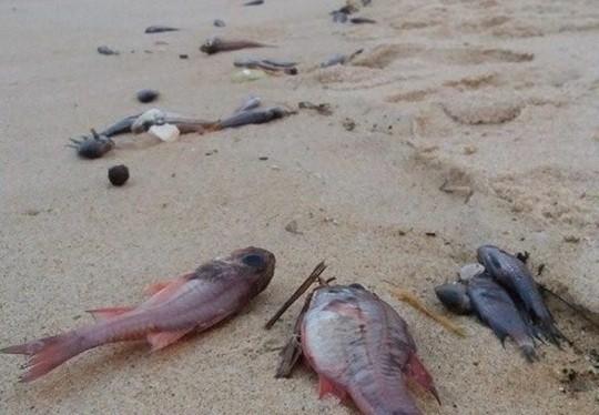 Thủ tướng yêu cầu làm rõ nguyên nhân cá chết hàng loạt ảnh 1