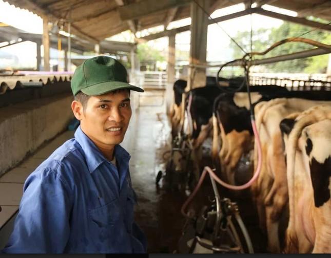 Hiếm có Việt Nam: Thị trấn 600 tỷ phú, lái ôtô dạo thăm bò ảnh 2