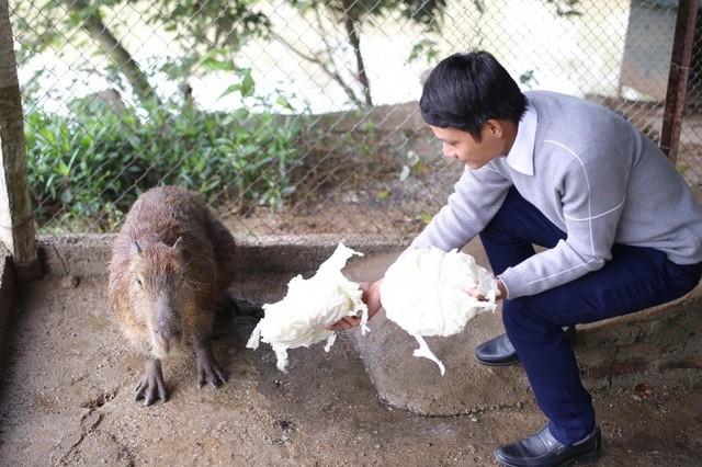 Hà Nội xuất hiện chuột khổng lồ nặng hơn 50 kg nuôi như nuôi lợn ảnh 2