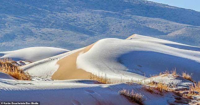 Ngỡ ngàng bộ ảnh tuyết phủ sa mạc Sahara đẹp như mơ ảnh 6