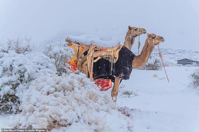 Ngỡ ngàng bộ ảnh tuyết phủ sa mạc Sahara đẹp như mơ ảnh 7