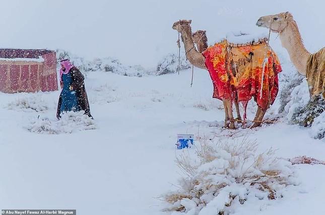 Ngỡ ngàng bộ ảnh tuyết phủ sa mạc Sahara đẹp như mơ ảnh 8
