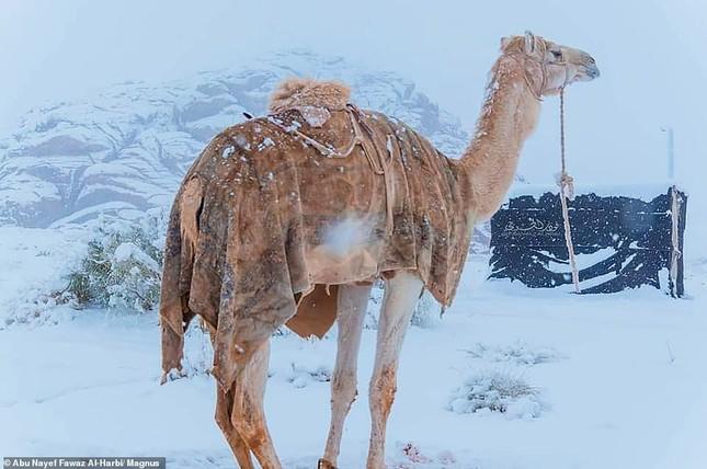 Ngỡ ngàng bộ ảnh tuyết phủ sa mạc Sahara đẹp như mơ ảnh 9