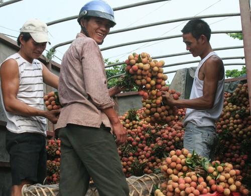 Hơn 1.000 hộ nông dân Bắc Giang có thu nhập trăm triệu từ vải thiều ảnh 1