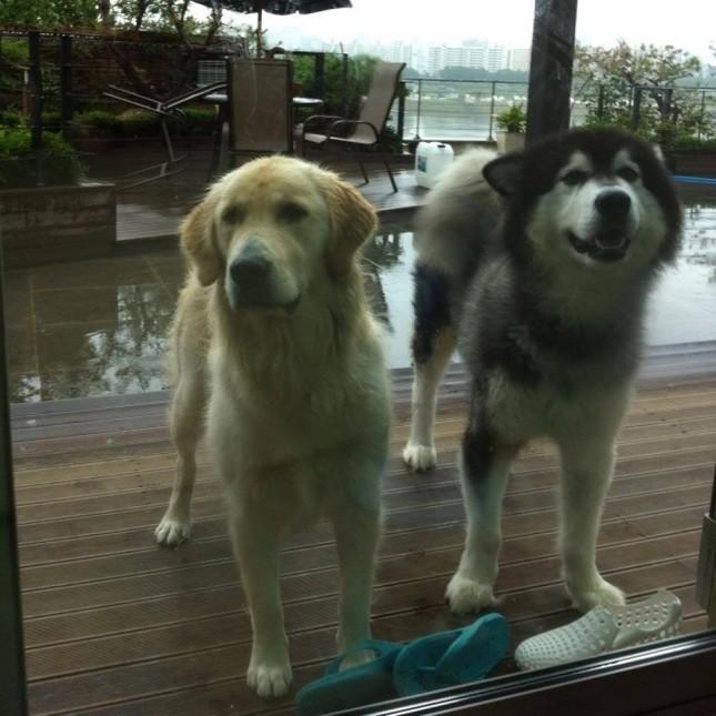 Park Yoochun bị đòi bồi thường 24 tỷ đồng vì để chó cắn người từ gần 10 năm trước ảnh 1