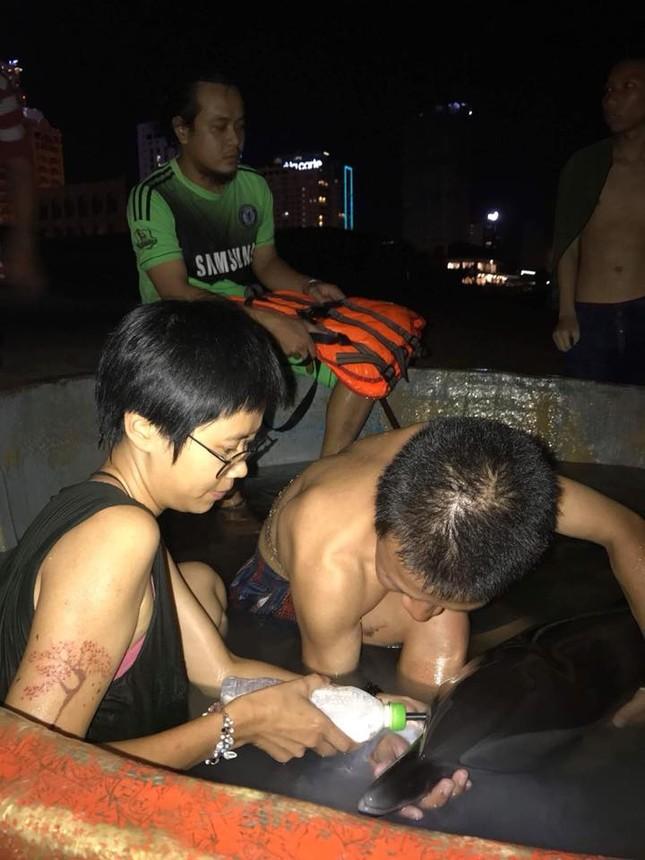 Hành động đầy nhân văn của người dân Đà Nẵng và cộng đồng cứu hộ cá heo bị thương ảnh 6
