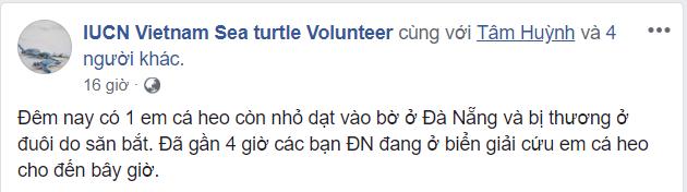 Hành động đầy nhân văn của người dân Đà Nẵng và cộng đồng cứu hộ cá heo bị thương ảnh 3