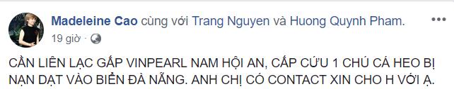 Hành động đầy nhân văn của người dân Đà Nẵng và cộng đồng cứu hộ cá heo bị thương ảnh 4