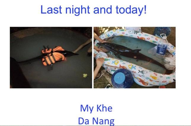 Hành động đầy nhân văn của người dân Đà Nẵng và cộng đồng cứu hộ cá heo bị thương ảnh 7