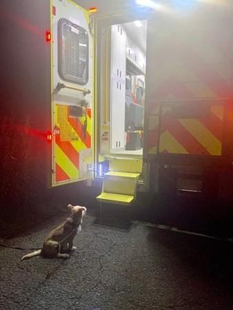 Bức ảnh Jack ngồi ngóng khi chủ đang được cấp cứu.