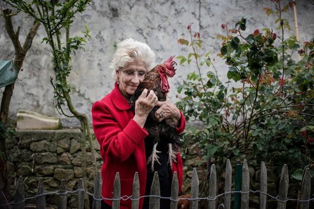 Cả nước Pháp đang tranh cãi về quyền gáy của một con gà trống ảnh 1