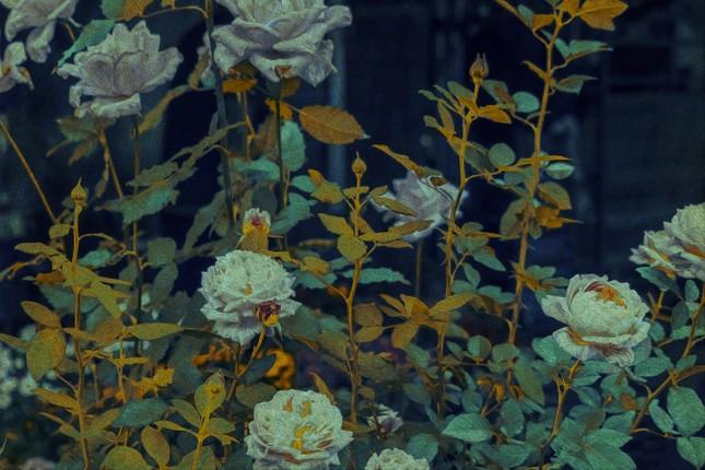 Bạn đã từng chiêm ngưỡng một Đà Lạt xinh đẹp qua những bức tranh sơn dầu? ảnh 3